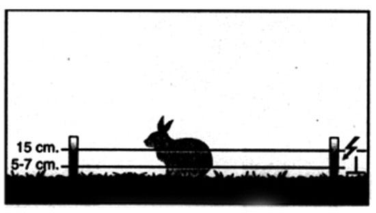 Ejemplo cercado conejos - Pastorelectrico.com